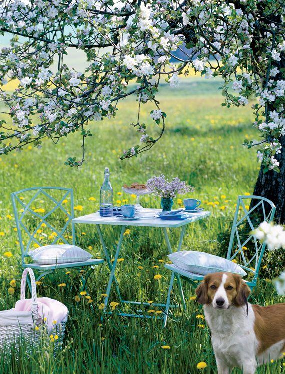 sady w kwiatach kwiaty w sadzie kocham wie sch nes. Black Bedroom Furniture Sets. Home Design Ideas