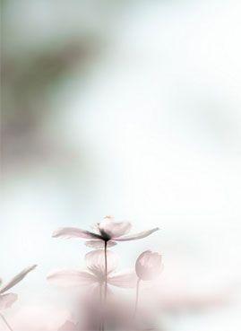 mimiemontmartre #fleurs #flowers #decoration florale #mimiemontmartre