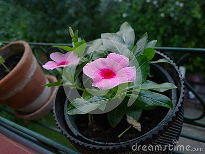 Just a flower pot I photographed