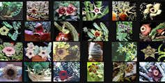 Help identifying succulents: The Succulent Plant Page Wall of Images