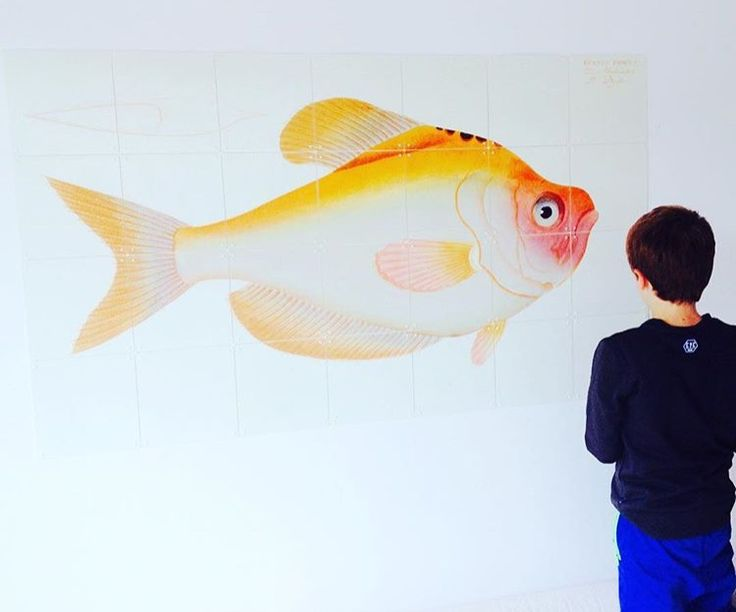 Hi Fish! In the #IXXI Natural History Museum Imagebank now. For more inspiration, see: http://www.ixxidesign.com/blog #IXXI #wall #livingroom #walldecoration #interior #fish #animals #home #inspiration #art #design #decoration