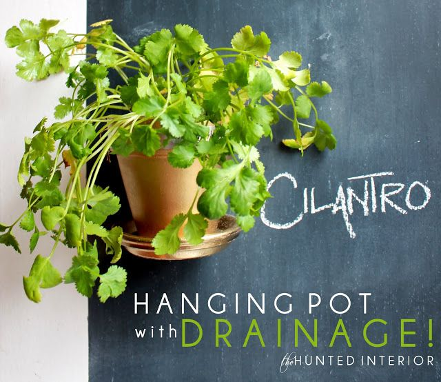 hanging pots would be great for keeping fresh herbs in the kitchen from the hunted