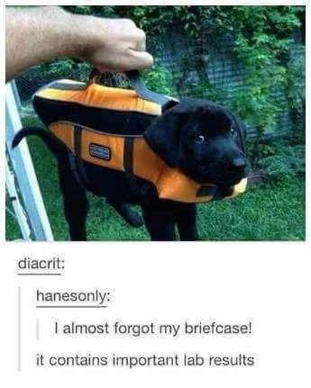 20 Funny Dog Memes