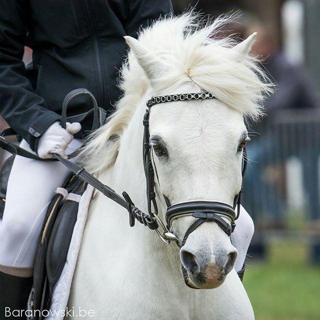"""Witte bliksem⠀ (Luna vond de naam 'Lars' wat minnetjes voor zo'n geweldige pony 🐴🐴)⠀ Maar voor ons blijft hij toch altijd ons """"Larske""""⠀🐴 .⠀ ..⠀ ...⠀ ..⠀ .⠀ #pony #ponylove #ponies #ponykids⠀⠀ ⠀⠀ #horse #horsephotography #horsephotos #equine #equinephotography #pferde #pferdefotografie #paard #paardenfotografie #cheval #horsesofinstagram #horsestagram #horseriding #bestofequinephotography #horsephotographer #instahorse #paardenfotograaf #europaspferde #equestrian #horseshow⠀⠀ #LRV…"""