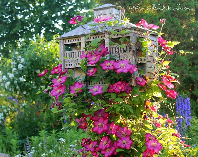 Ville de Lyon clematis growing up a lovely birdhouse..... designs like this to the side of your front yard add fabulous curb appeal (plus appeal anywhere you have this... in the back yard too, etc.)!!!!!!