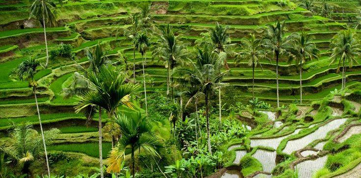 Ubud Bali - Merupakan tempat wisata yang paling diminati oleh turis mancanegara karena keindahannya. Berikut tempat wisata terpopuler dan indah di ubud bali