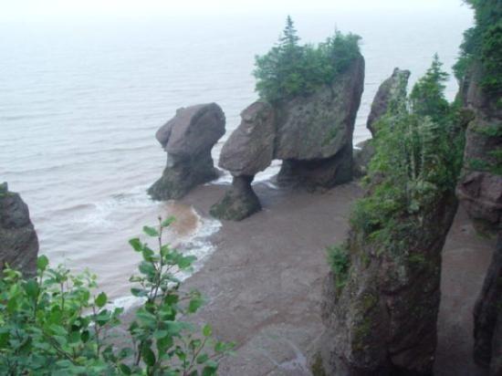 https://www.tripadvisor.ca/Attraction_Review-g499173-d183716-Reviews-Fundy_National_Park-Alma_Albert_County_New_Brunswick.html