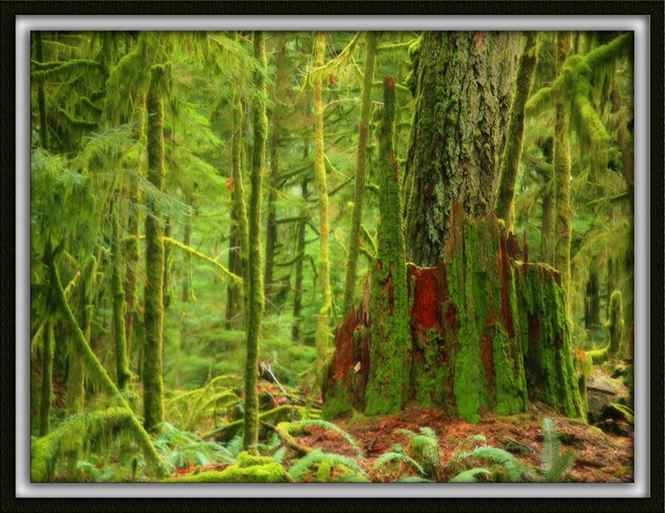 Fiery Reds of Cathedral Grove