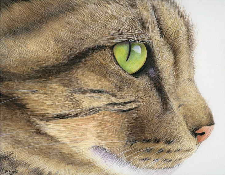 Gayle Mason Fine Art: 'Up Close and Personal' - Macro Cats