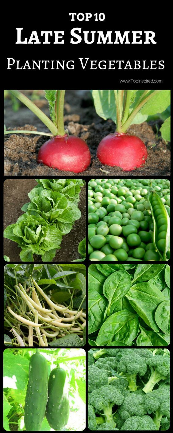 Top 10 Vegetables To Plant In Late Summer Planting 400 x 300