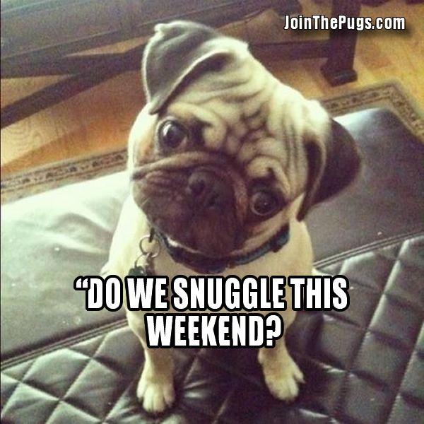 Join The Pugs! @Rachel Remmele