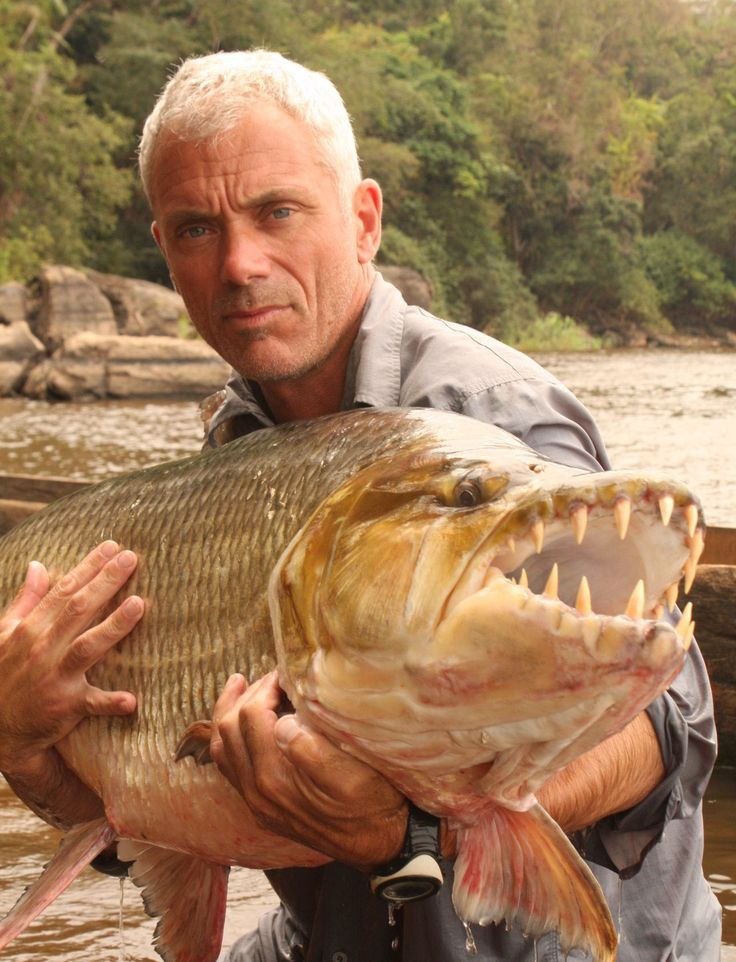 Awesome monster Tiger Fish catched by Jeremy Wade in River Monsters. Beautiful! #JeremyWade #RiverMonsters #AnimalPlanet