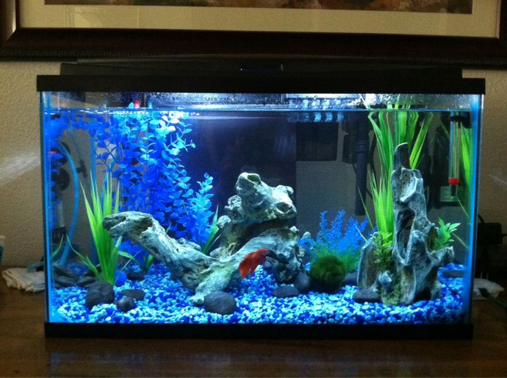 The 25 best 10 gallon fish tank ideas on pinterest 1 for Fish for a 10 gallon tank