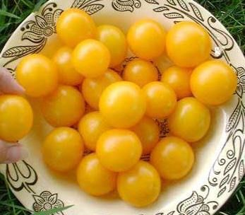 17 best tomatoes you knew this was coming right images