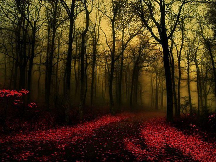 Dark Gothic Forest