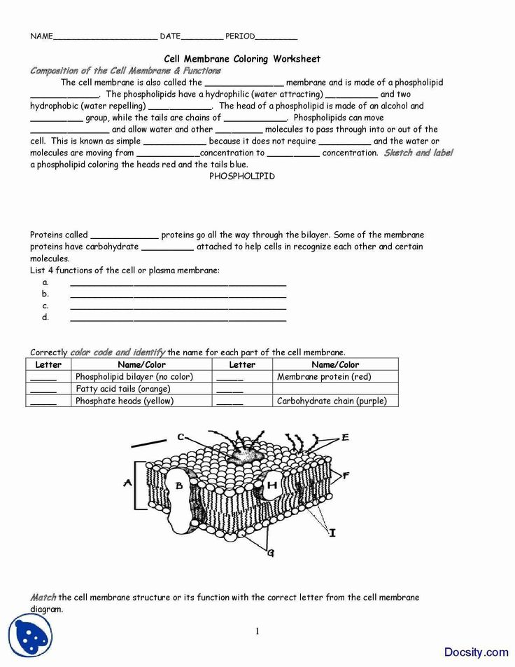 Cell Membrane Coloring Worksheet Luxury Cell Membrane ...