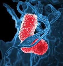 New Report Shares Details about the Klebsiella Pneumoniae Infection Drug Sales Market