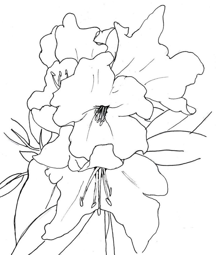 coloring pages for rhododendron - photo #8
