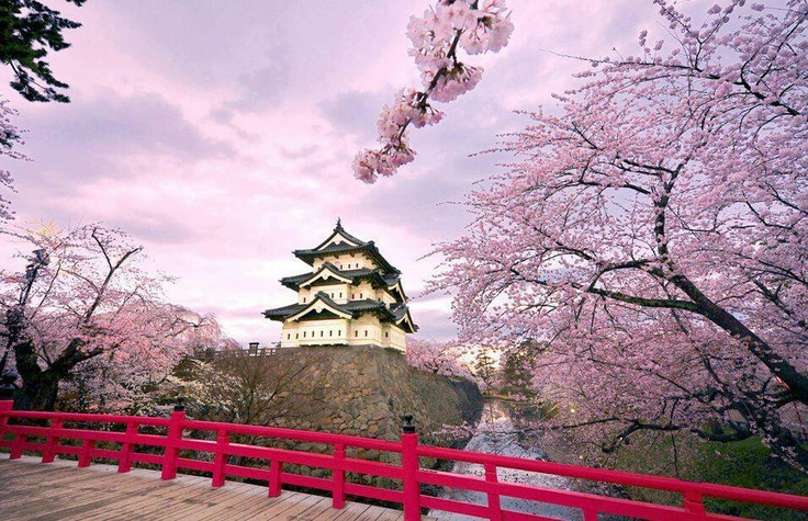 Cherry blossoms Hirosaki castle, Japan.