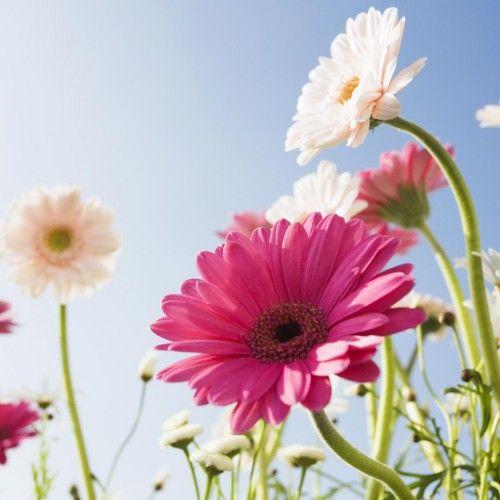 Gastgeschenk Blumensamen