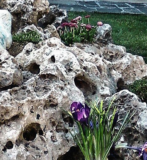 rock garden, particolare