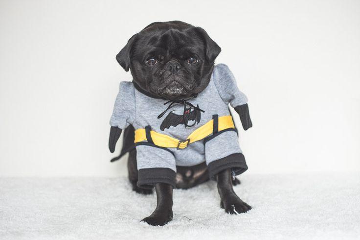 Pug Photo Challenge | www.thepugdiary.com