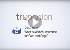 Dog Insurance for Accidents & Illness - Trupanion
