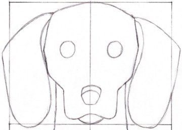 Drawing of Dachshund Face | How to Draw a Dachshund - 2.5: Head Detail Outline