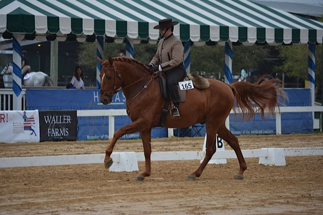 Fuego DC and Joao Graca Working Equitation