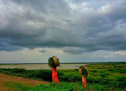 Central India to receive good rains in coming days, kharif crops to benefit - See more at: http://www.skymetweather.com/content/weather-news-and-analysis/central-india-to-receive-good-rains-in-coming-days-kharif-crops-to-benefit/#sthash.koIffZGH.dpuf