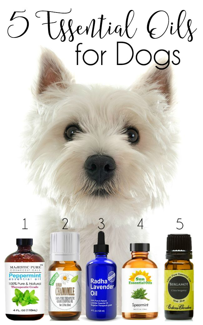 5 Essential Oils for Dogs…