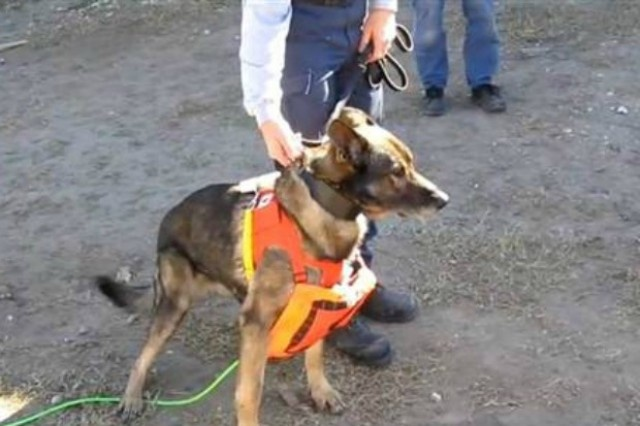 "Amazing! A robotic ""snake"" camera works with search and rescue dogs to save lives.: Rescue Dogs, Camera Works, Working Dogs, Robotic Snake"