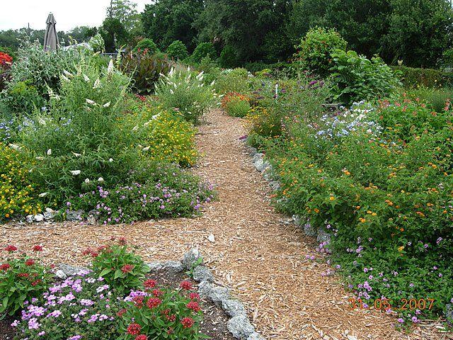 Texas Butterfly Garden   Google Search