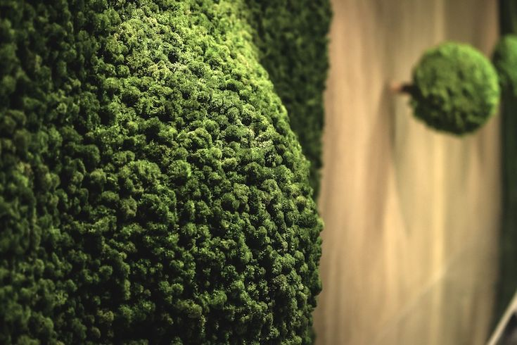Sculptured moss design, detail from Green Dunes installation