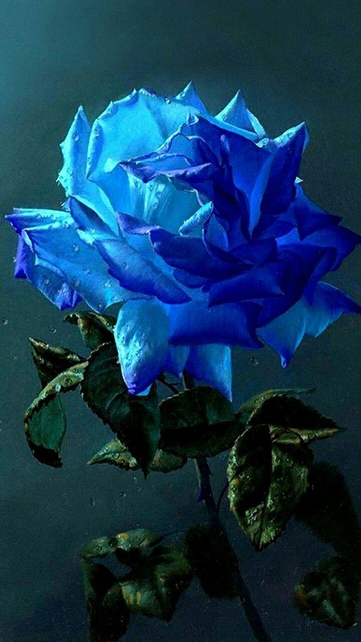Картинки отдыхе, картинки анимации синяя роза