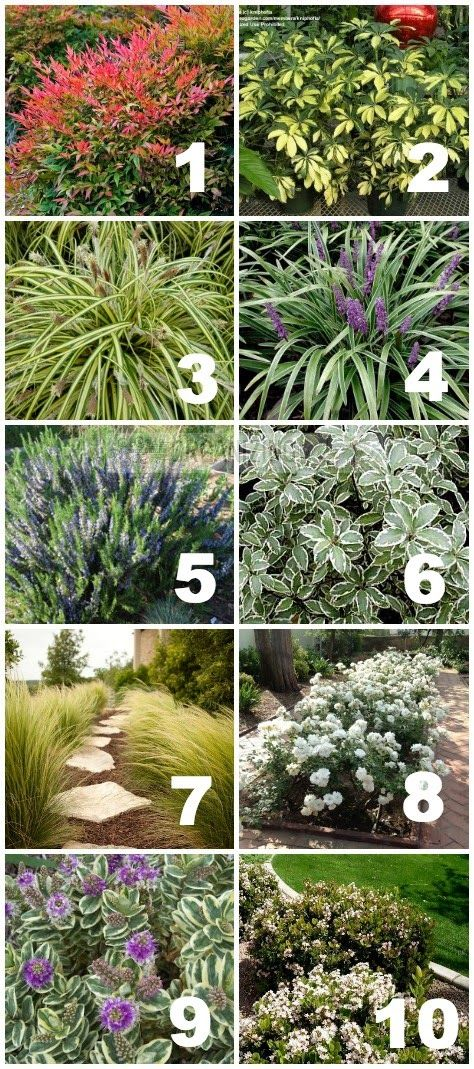 List of plants used in california drought tolerant yard for Landscaping plants