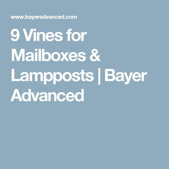 9 Vines for Mailboxes & Lampposts | Bayer Advanced