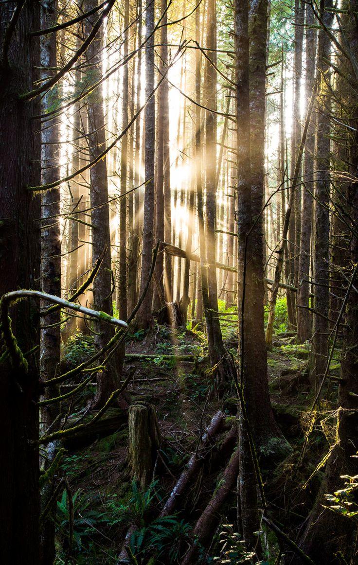Pacific Rim National Park, British Columbia, Canada by Jonathan Zalger