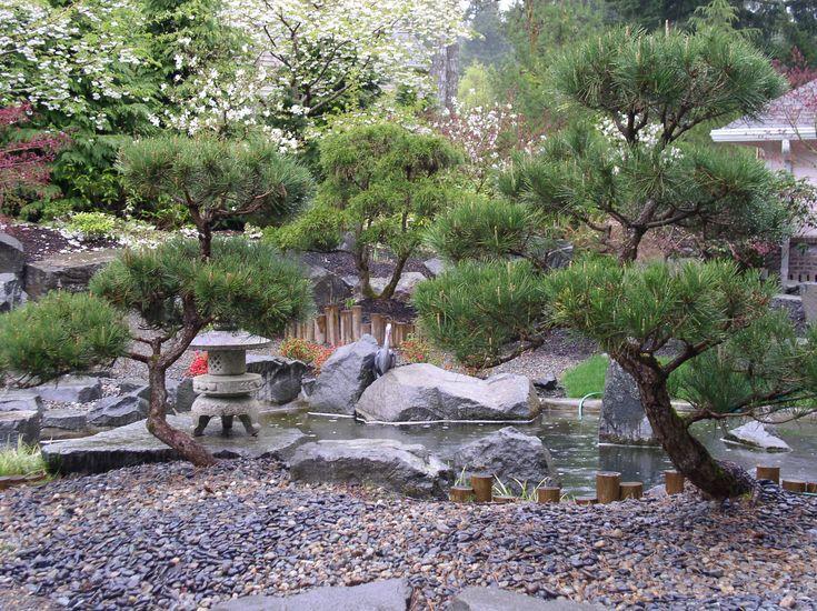 16 best images about japanese black pine on pinterest for Zen garden trees