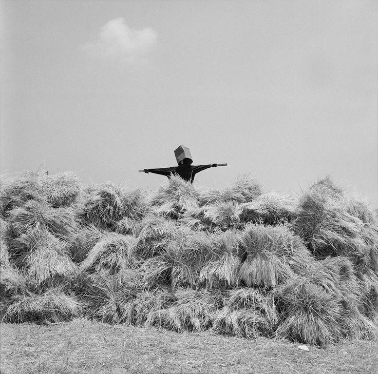Κρυφτό στον αγρό... Πάρος. Φωτογραφία του Ζαχαρία Στέλλα.