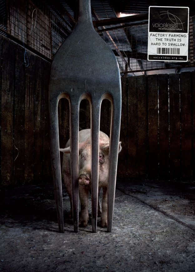 Factory Farming: The Truth Is Hard To   Swallow