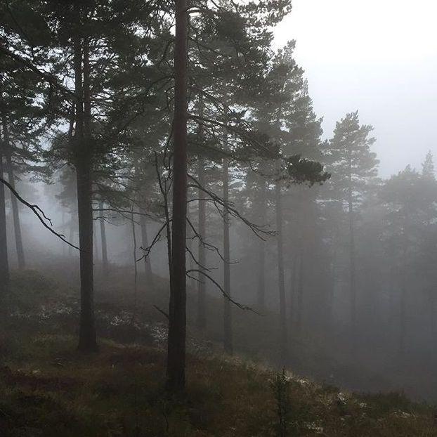 Natura e nebbia