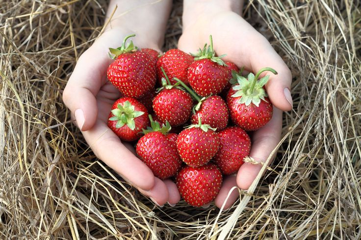 Strawberry Nutrition Facts, Health Benefits,