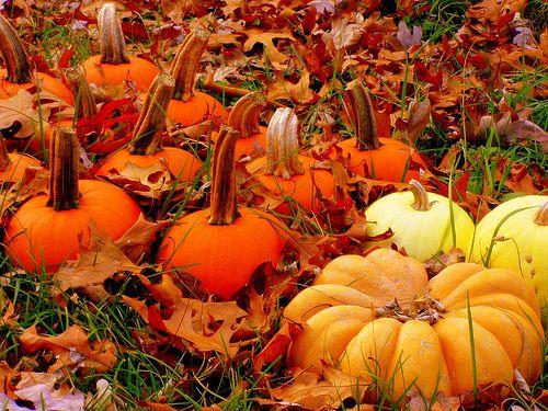 variety.Fall Pumpkin, Things Autumn, Autumn Air, Autumn Leaves, Fall Yall, Favorite Seasons, Autumn Colors, Autumn Pumpkin, Pumpkin Patches