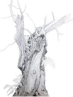 Alessandro Sacchetti - Wildlife Painter: Castagno, grafite di varia durezza (carta Fabriano...