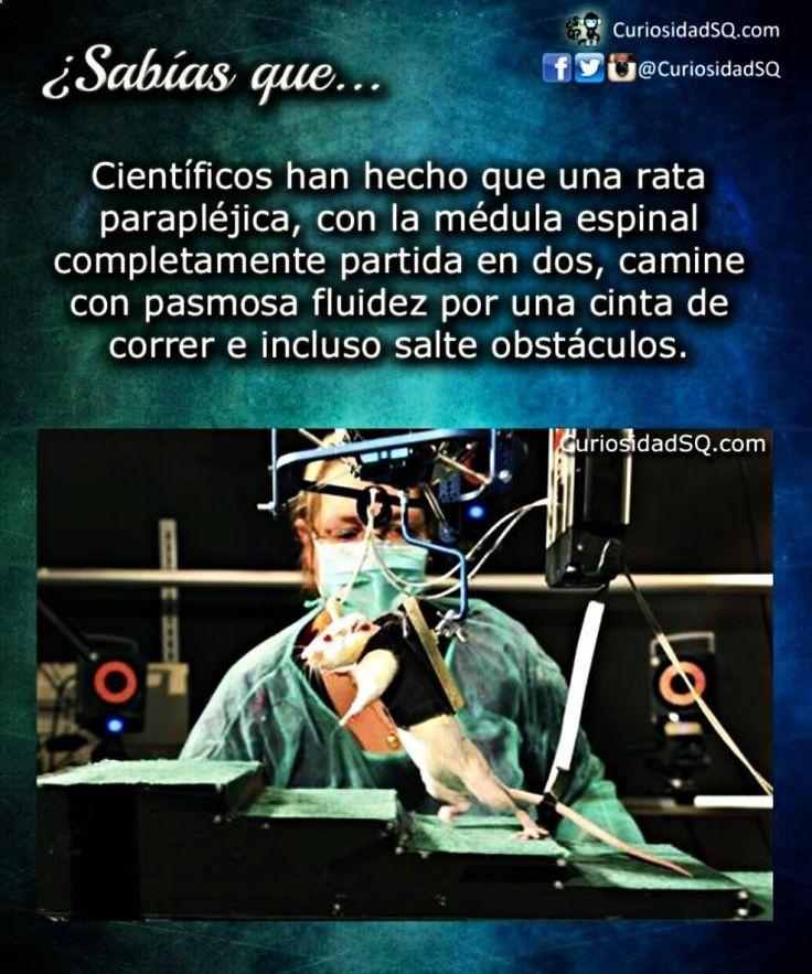 ッ Descubre Kpop Curiosidades, Un Sabias Que De Historia y Zed Sabias Que aquí → → → http://www.cienic.com/curiosidades-de-venezuela/
