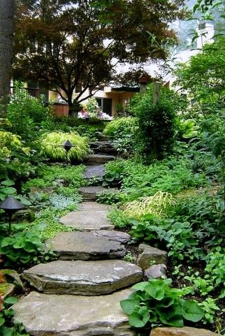 flagstone path & steps through foliage that feels very much like the forest...