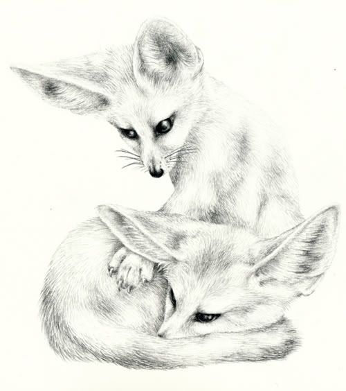 fennec fox drawing two little fennec foxes drawings