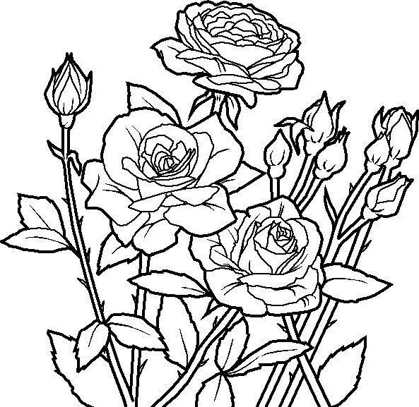 Rose Flower Unique Coloring Page Reference Pinterest