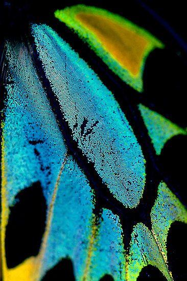 Cairns Birdwing Detail II. Green Aqua turquoise teal